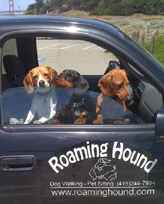 Contact Roaming Hound